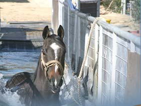 Horses benefit from Hydro Horse Treadmill Therapy